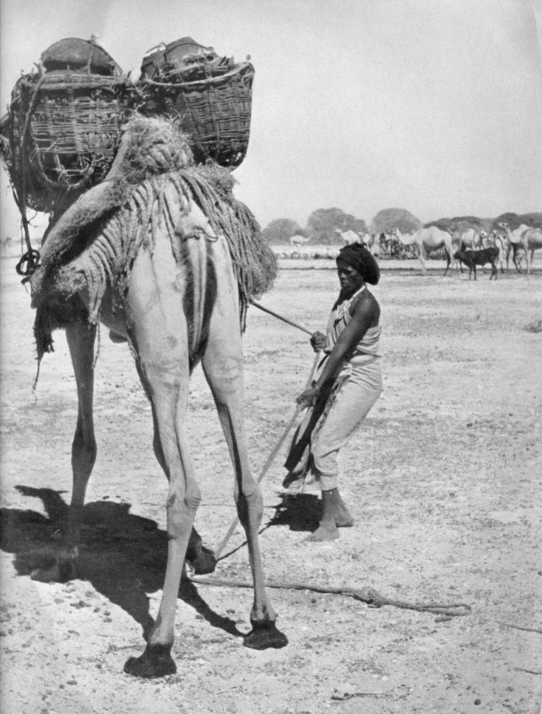 Somali nomad and her camel